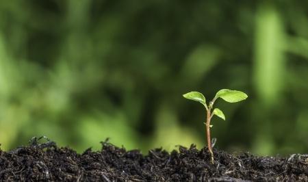 Leaf Growing - Where It Began
